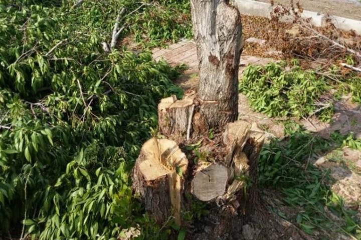 قطع درختان پارک جنگلی ارومیه