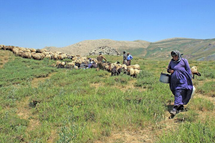 گذری بر احوالات دامداران و کشاورزان صومای برادوست