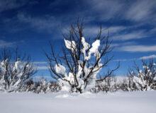طبیعت ارومیه پس از بارش برف سنگین زمستانی