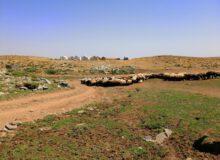 ۷هزار نفر از عشایر آذربایجانغربی برای اخذ کارت تردد دام ثبت نام کردند