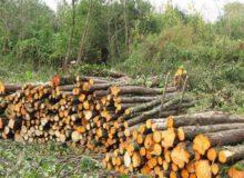 ظرفیت خوب ارزآوری زمینهای غیرقابل کشت؛