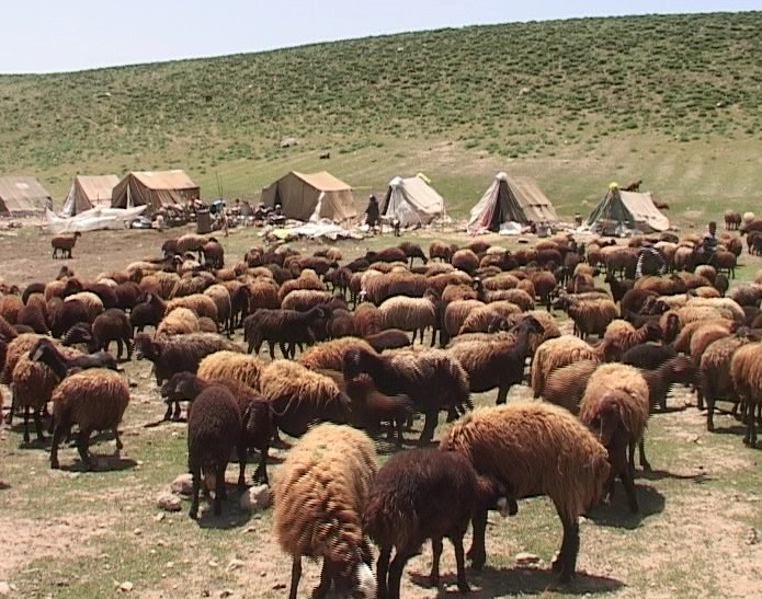 کوچ عشایرآذربایجان غربی به ییلاقات