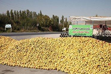 رئیس جهاد کشاورزی آذربایجان غربی : حتی آخرین کیلو از سیب صنعتی نیز خریداری می شود