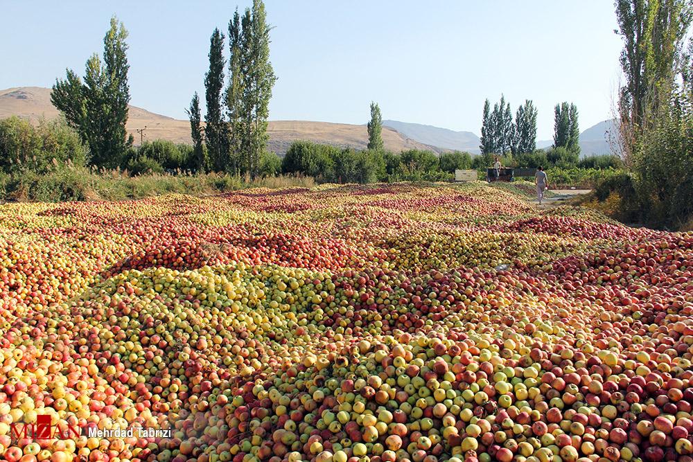 بازار خراب سیب – ارومیه
