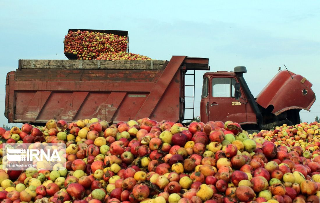 مجوز صادرات سیب زیردرختی صادر شده است